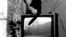 Cat on TV