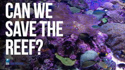 Can We Save the Reef? - Efforts to Preserve The Great Barrier Reef